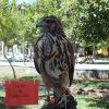Vallecito_Encantado (4)