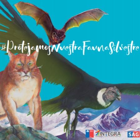 Protejamos Nuestra Fauna Silvestre